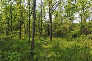 Massivholz-Highlight: Amerikanischer Nussbaum