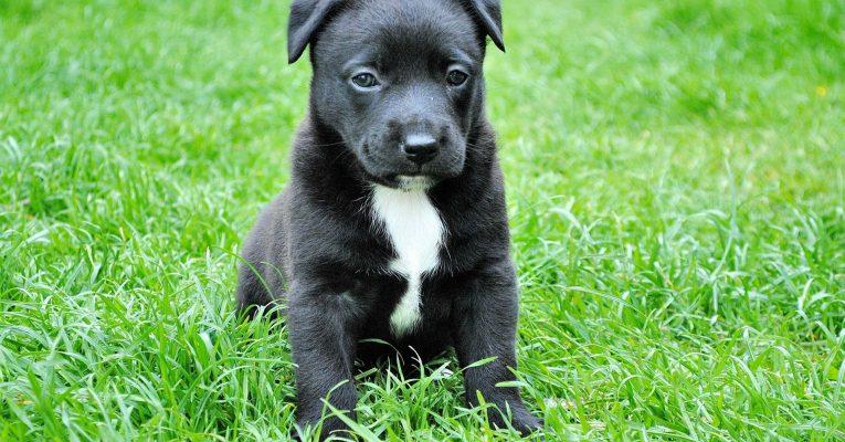 Bosch stellt hochwertiges Trockenfutter für Hunde her